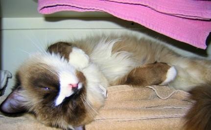 "Rescuing PetSmart's ""Meanest"" Cat"