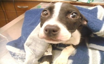 Starving Dog Jumps From Third Story Window And Survives