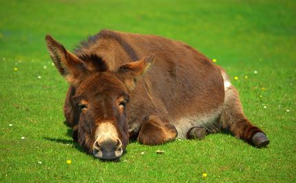Donkeys Journey to Safety (Video)