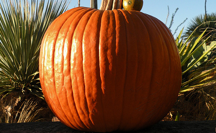 Frankenpumpkin?: Growing a One-Ton Pumpkin