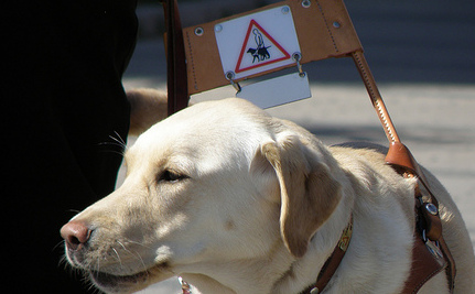 Church Group Excludes Guide Dog From Retreat Facility