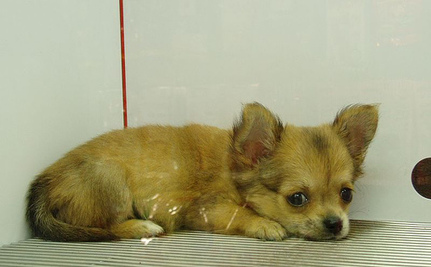 Victory! Jack's Pets Stops Selling Puppies