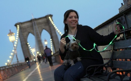 "Brooklyn Bridge ""Pup Crawl"" Lights the Night"