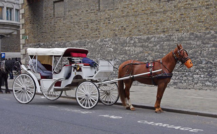 Carriage Horse Drops Dead in New York