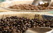 Climate Change Might Put the Coffee Supply At Risk