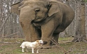 Elephant Tarra Mourns Bella the Dog