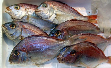 Fish Mislabeling Rampant In Stores and Restaurants
