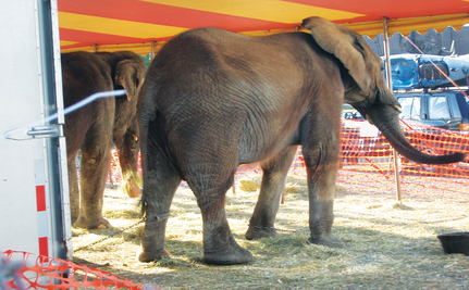 Historic Bill Protects U.S. Circus Animals (Slideshow)