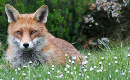 Support West Hollywood's Move to Go Fur Free