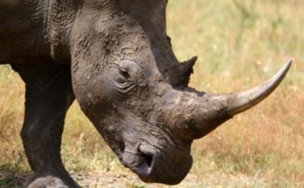 Flying Rhinos – Video