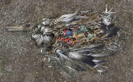 Update on the Great Pacific Garbage Patch (Yes, It's Still There)