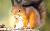 Peanut Butter & Love: Squirrel Returns to Trees Thanks to Good Samaritan