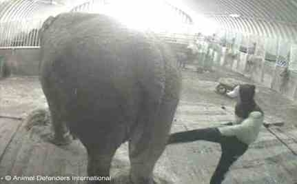 Elephant Cruelty Case: Owners of Anne Will Be Prosecuted