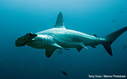 Coastal Countries Step Up For Sharks