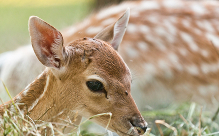 30 Seconds of Joy: Women Rescue Bleating Fawn Trapped in Fence
