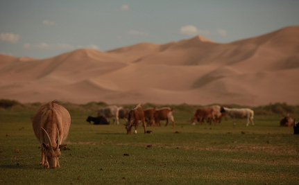 Mongolians Team Up to Preserve Huge, Grassy Commons