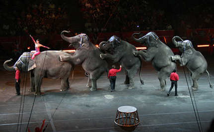 Ringling Circus Slapped With Biggest Fine Ever ($270,000)