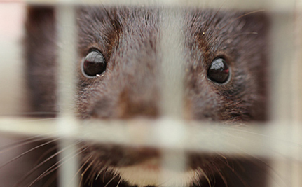 BCBG Must Ditch Fur!