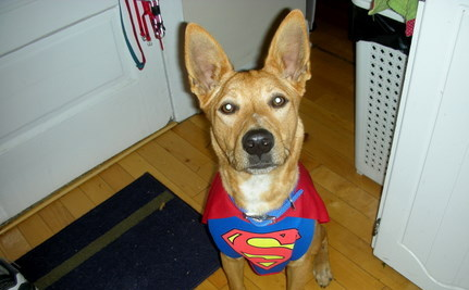 Superdog Flies Across North America: One Lick Saved His Life