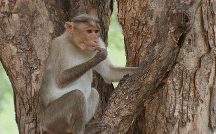 Activists Protest Company's Plan To Test Monkeys For Radiation