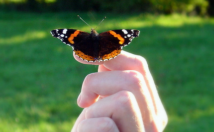 72% of UK Butterfly Species in Decline