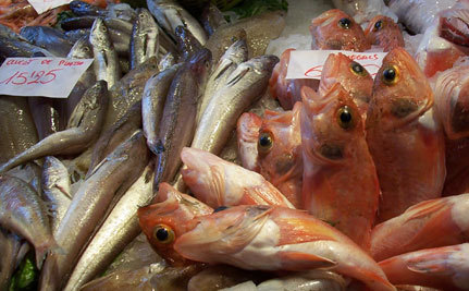 Mercury: Poisoned By Tuna Fish