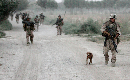 Marine Welcomes Home Dog He Rescued, But Never Met
