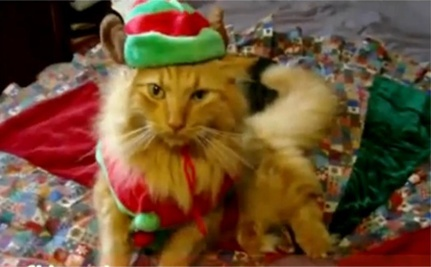 Pets Sing Jingle Bells – Hilarious Holiday Video