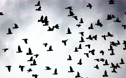 Flock Of Birds Mistake Walmart Parking Lot For Pond