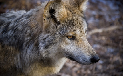 Endangered Species Act Neglecting Hundreds of Animals