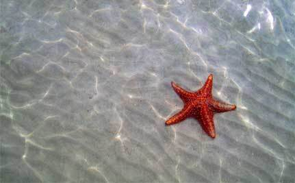 Beyond the Starfish: Creating Systemic, Lasting Change in the New Year