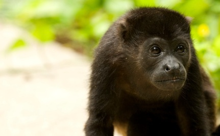Save Costa Rica's Wildlife from Electrocution