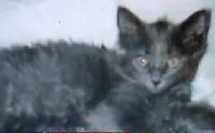 Recovering Addict's Therapy Kitten Euthanized
