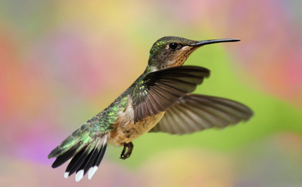 Engineer Saves Hummingbird Trapped in Warehouse & Gets Surprise Visit