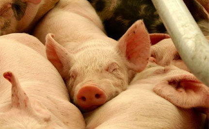 Update: FDA Restricts Some Antibiotics in Livestock