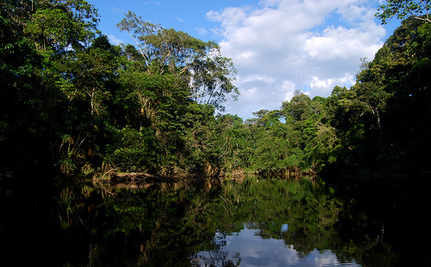 Donations Stop Oil Drilling In a National Park in Ecuador