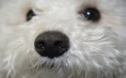 Poodle Shot Dead By Airport Security