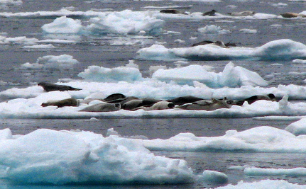 Tell Canada It Has No Excuses Left For Seal Hunt