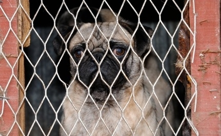 Ireland Bans Puppy Mills (Video)
