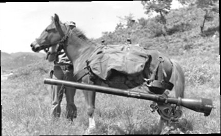 A Real War Horse: Sgt. Reckless, Korean War Hero