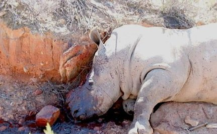 Poachers Have Already Killed Eleven African Rhinos in 2012