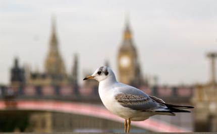 Activist Spotlight: Peter Collins � Helping Animals in the U.K.