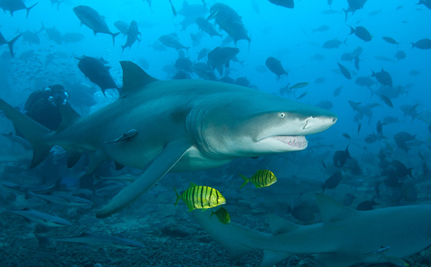 The Tide is Turning for Sharks