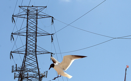 Utility Worker Frees Seagull Caught in Power Line (Video)