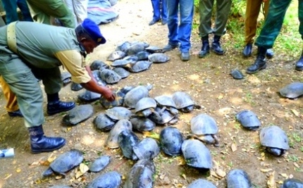 Secret Swamps for Rescued Terrapin Turtles: Smugglers Caught Red Handed