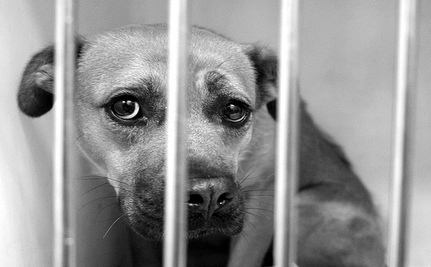 Your Help Is Needed To Pass 'The Florida Animal Rescue Act'