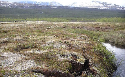 Increased Arctic Shrubbery May Destroy Permafrost