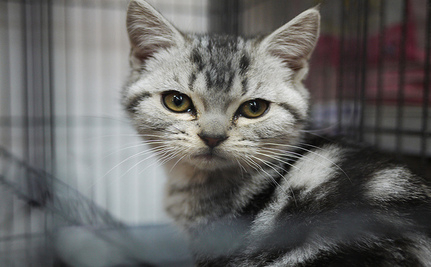 University Of Virginia: Stop Using Live Cats For Medical Training