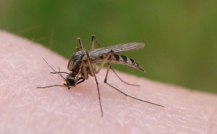 Worldwide Malaria Deaths Severely Underestimated