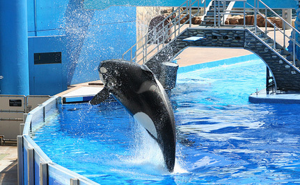Are SeaWorld Orcas Illegal Slaves?